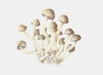Schermafbeelding_2013-08-14_om_10.34_.36__thumb-411x299