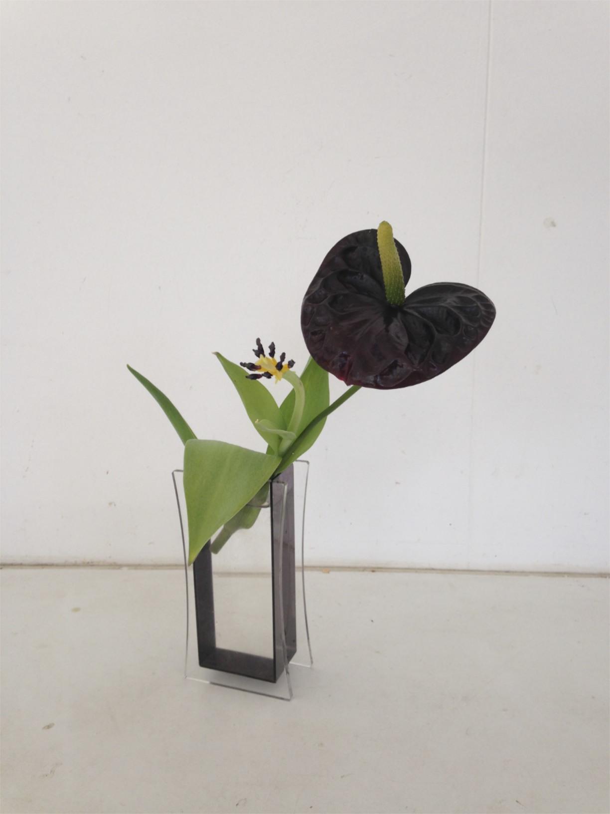 mijn planten en bloemen anthurium hanakunst